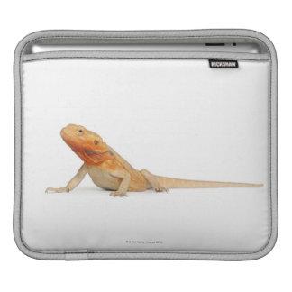Dragon barbu scaleless de SilkBacks - Pogona Poche iPad