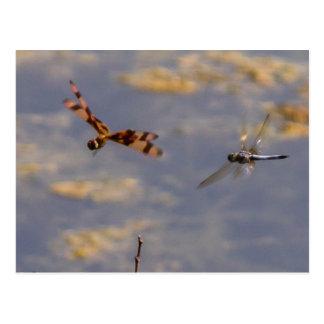 Dragons en vol cartes postales