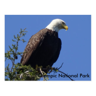 Eagle chauve, carte postale olympique de parc