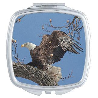 Eagle chauve sur une branche d'arbre