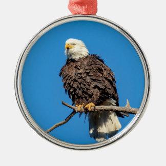 Eagle chauve sur une branche d'arbre ornement rond argenté