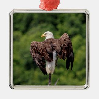 Eagle chauve sur une branche ornement carré argenté
