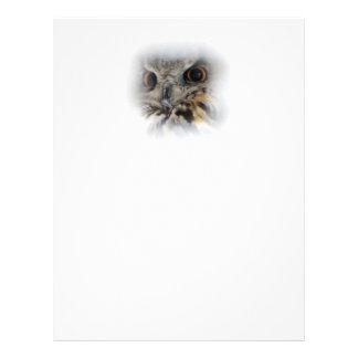 Eagle-hibou eurasien prospectus 21,6 cm x 24,94 cm