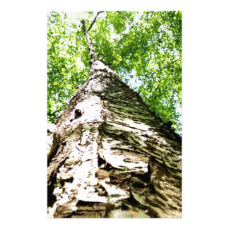 Écorce d'arbre papeterie