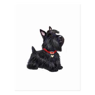 Écossais Terrier (a) - (par JBF) Carte Postale