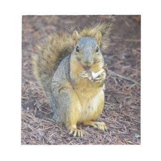 Écureuil affamé heureux bloc-note