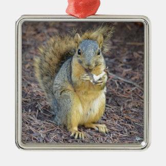 Écureuil affamé heureux ornement carré argenté