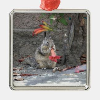 Écureuil affectueux de fleur ornement carré argenté