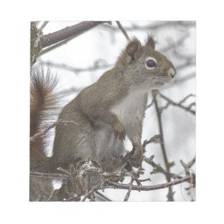 Écureuil dans un arbre bloc-note