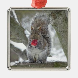 Écureuil de fraise ornement carré argenté