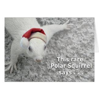 Écureuil de Noël Carte