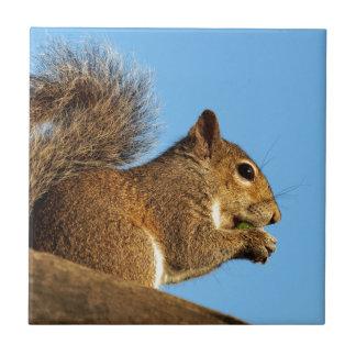 Écureuil mangeant dans un arbre contre le ciel petit carreau carré