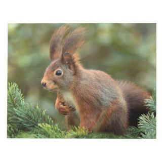 Écureuil mignon bloc-note