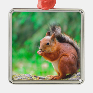 Écureuil mignon ornement carré argenté