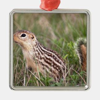 écureuil moulu de 13 rayures ornement carré argenté
