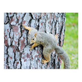 Écureuil rampant un arbre carte postale