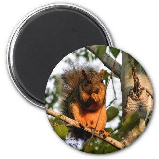 Écureuil rouge - aimant