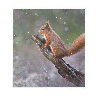 Écureuil rouge en Ecosse Bloc-note