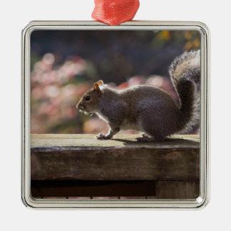 Écureuil rougeoyant ornement carré argenté