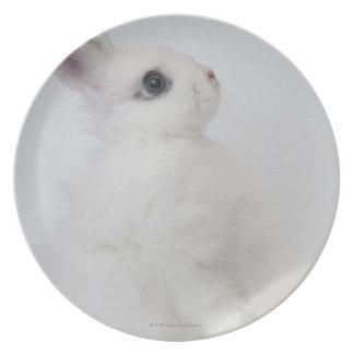 Een wit konijn. Jersey Wooly. Melamine+bord