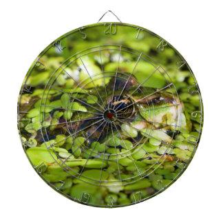 Eetbare Kikker Pelophylax kl. Esculentus Dartbord