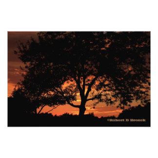 Élargissement de photo de silhouette d'arbre de