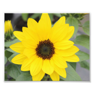 Élargissement de photo - fleur jaune lumineuse