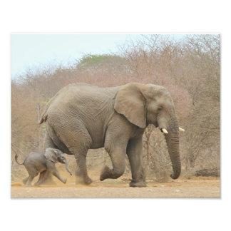 Éléphant - bébés animaux beaux impression photo