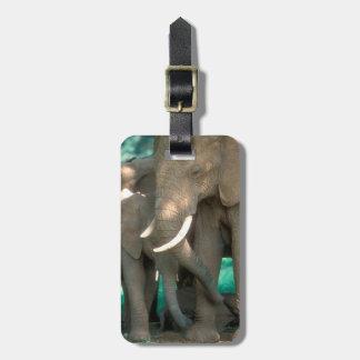 Éléphants protégeant des jeunes étiquette à bagage