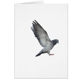 En fouettant des ailes carte de vœux