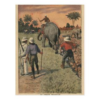 En français Congo, l'éléphant s'est exercé au Carte Postale