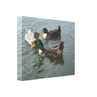 Enveloppe de toile de canards de Mallard de trio