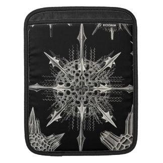 Ernst Haeckel | Acanthophracta Poches iPad