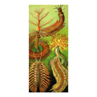 Ernst Haeckel Chaetopoda Carte Double Customisable