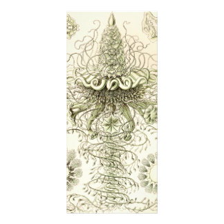 Ernst Haeckel Siphonophorae Cartes Doubles Customisables