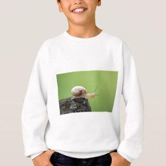 Escargot mignon sur le bord avec l'arrière - plan sweatshirt