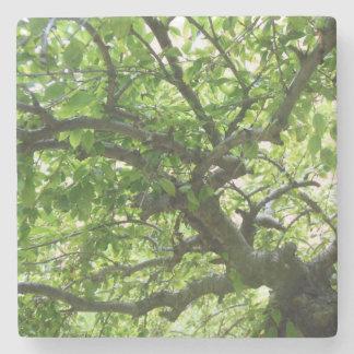 Été sous les arbres dessous-de-verre en pierre