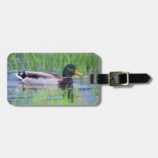 Étiquette À Bagage Canard masculin de canard flottant sur l'eau