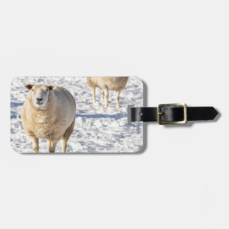 Étiquette À Bagage Deux moutons se tenant dans la neige pendant