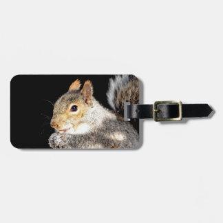 Étiquette À Bagage Écureuil mangeant un écrou