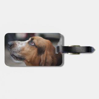 Étiquette À Bagage Étiquette de bagage de chien