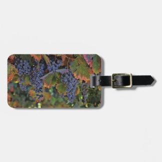 Étiquette À Bagage Étiquette de bagage de raisins de cuve de vignoble