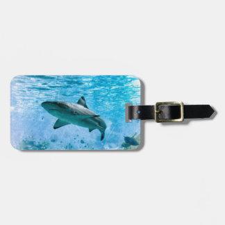 Étiquette À Bagage Étiquette vintage de bagage de requin