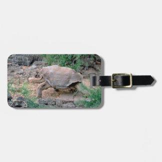 Étiquette À Bagage Étiquettes de bagage de tortue de Galapagos