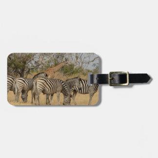 Étiquette À Bagage Groupe des zèbres et de l'étiquette de bagage de