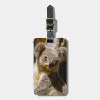 Étiquette À Bagage Le koala masculin personnalisent
