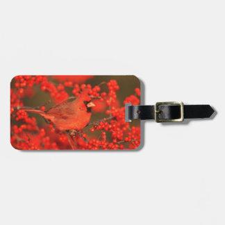 Étiquette À Bagage Mâle cardinal du nord rouge, IL