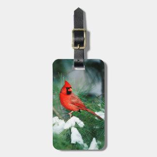 Étiquette À Bagage Mâle cardinal du nord sur l'arbre, IL