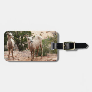 Étiquette À Bagage Mouflons d'Amérique drôles au parc national de