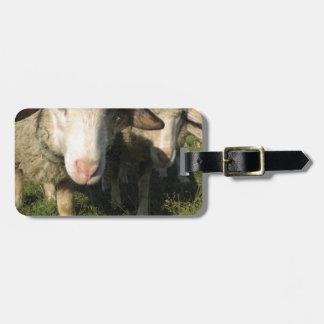 Étiquette À Bagage Moutons curieux